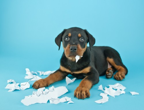 My dog ate my charity's accounts?